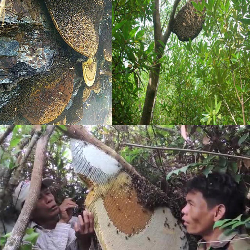 انواع عسل جنگلی