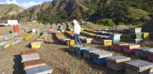 فروش عسل رس